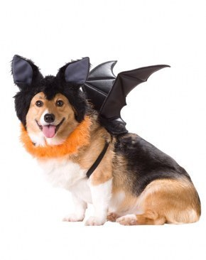 Animal Planet Bat dog costume  sc 1 st  The Costume Shop & Bat Dog Costume