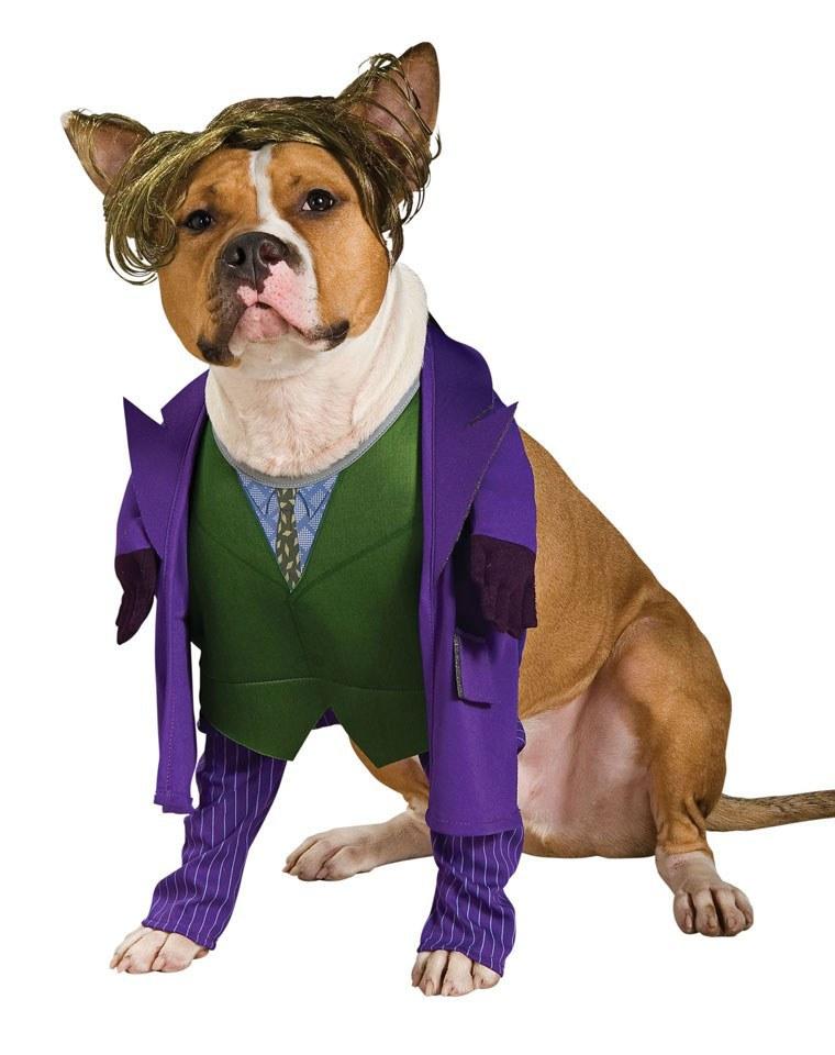 The Joker Pet Costume Costume Shop Ireland