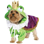 froggy doggy