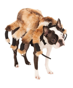Pet Giant Spider Costume