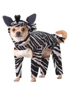 Animal Planet Zebra Dog Costume