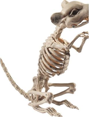 Rat Skeleton rat