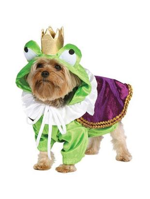 froggy doggy