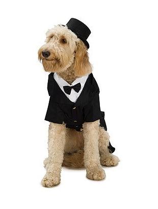 Dpper dog costume